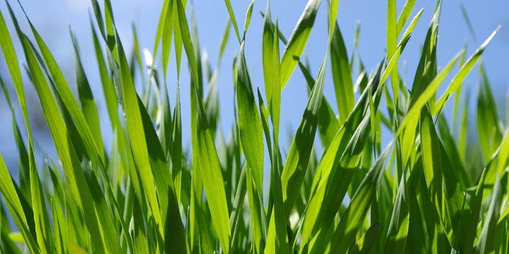 Grass - Gabi Siebenhuehner