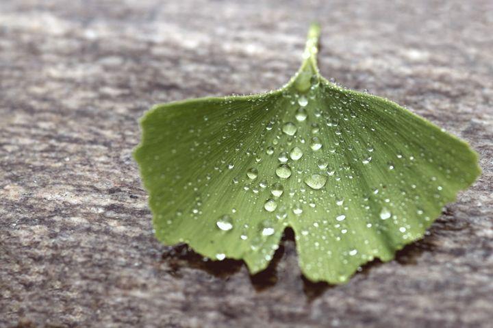 Ginkgo leaf and pearls - Gabi Siebenhuehner