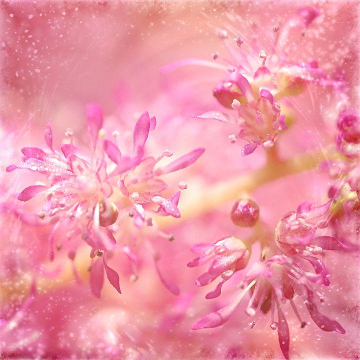 Pink Flower - Gabi Siebenhuehner