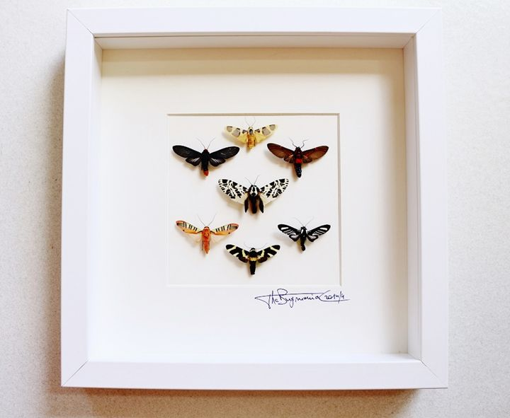 Mosaic tigermoths - Alanscollectibles