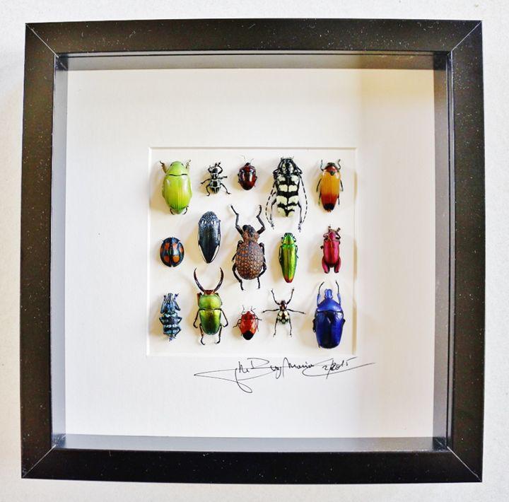 Mosaic beetles - Alanscollectibles