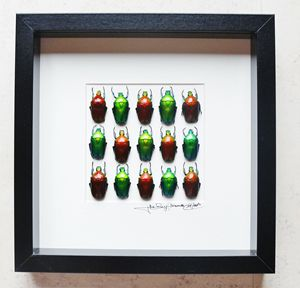 Design beetles