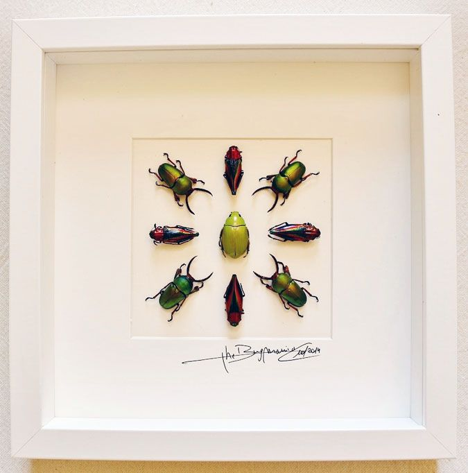 Design with beetles - Alanscollectibles