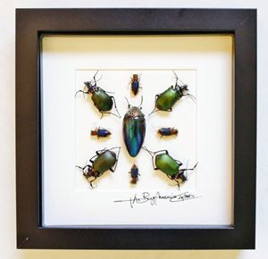 Design with beetles