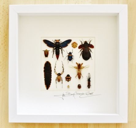 Design mixed insects - Alanscollectibles