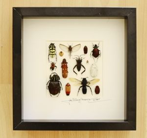 Design mixed insects
