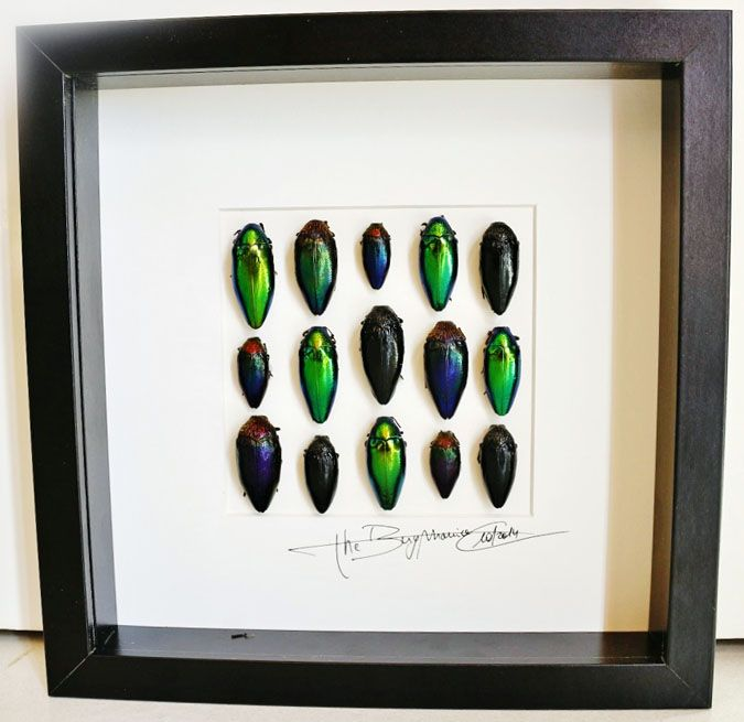 Design with jewelbeetles - Alanscollectibles