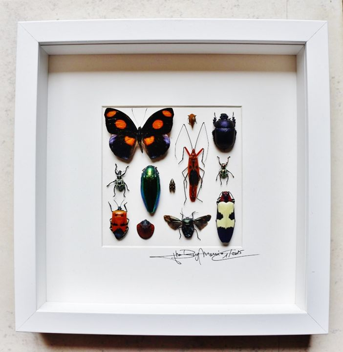 Mosaic mixed insects - Alanscollectibles
