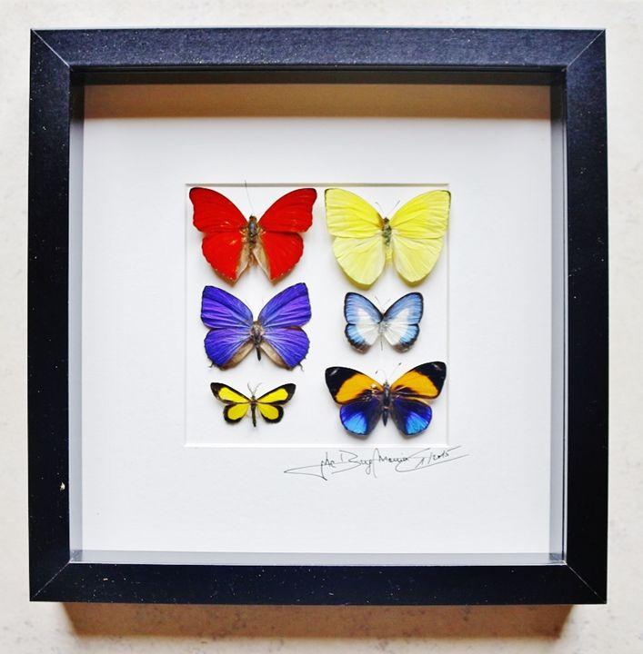 Mosaic butterflies of the world - Alanscollectibles