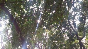 Sun glimpse