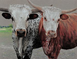 Texas Longhorn Cross -Colored Pencil