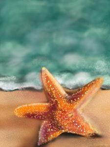 Tranquility starfish