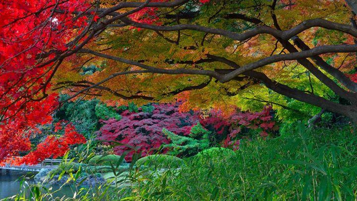Autumn Park Lake Trees Bridge Garden - lucky the creator