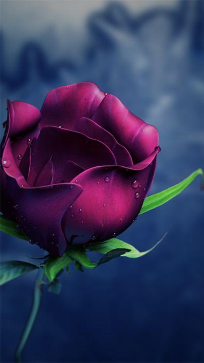 Rose for your valentine - PNG 3D artist