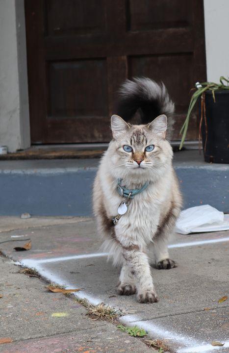 Corner Cat - Sophia Zeteo