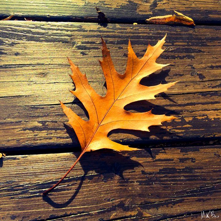 Leaf - Rabo Gallery