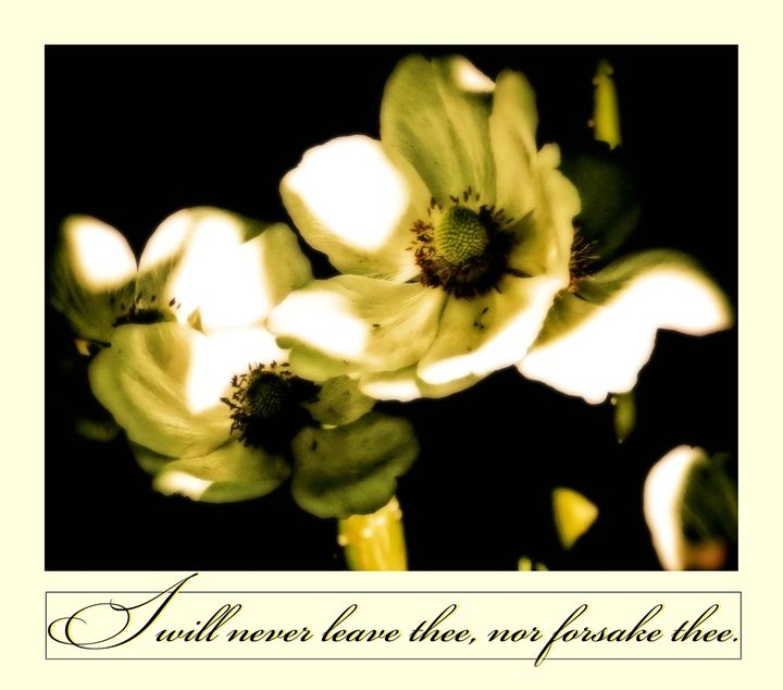 Never leave thee - ibelieveimages
