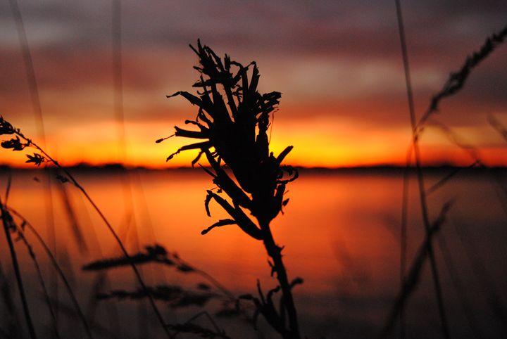 Sunset - Shawna Hunter