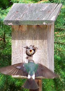 Swallow Feeding (Sequence 1 of 3) - LizzyO