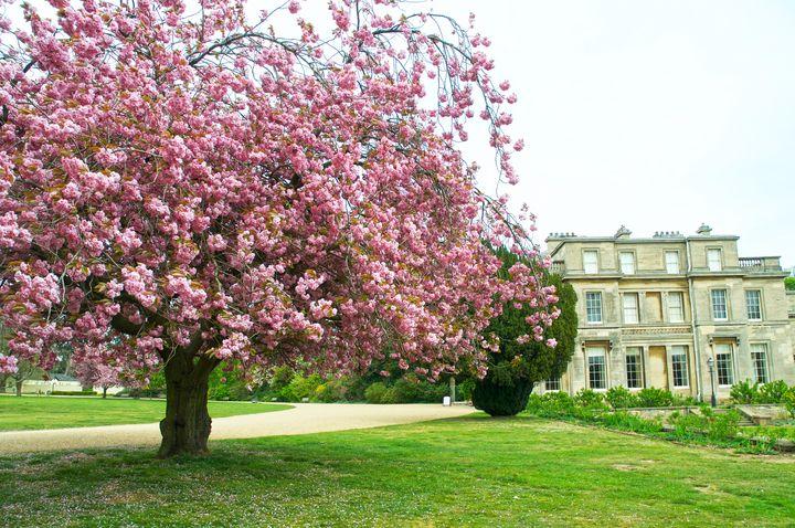 Cherry Tree and House - Stephen Walton