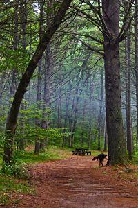 Trail Marker -  Solshinestudio