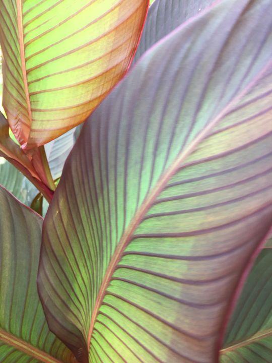 Leafy - ArtzeeJ