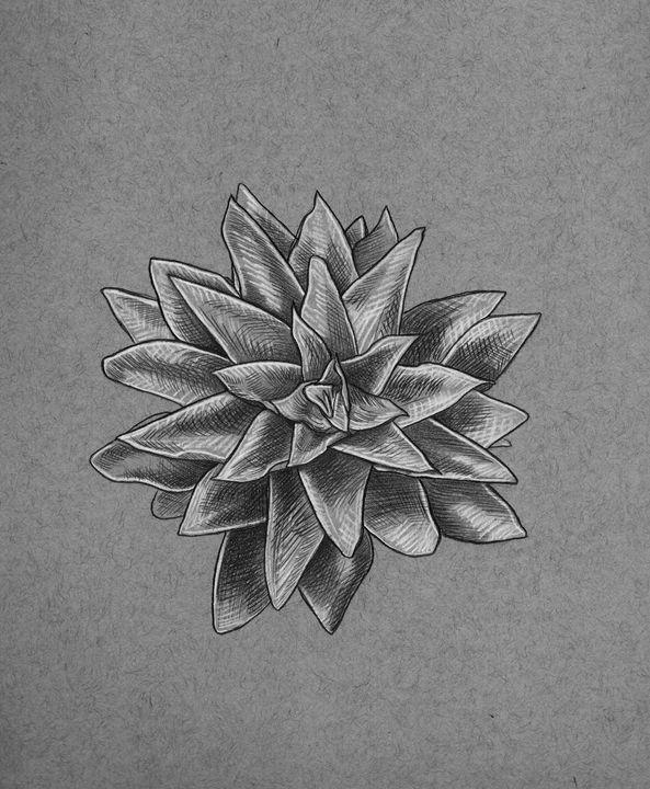 Succulent - hg_art