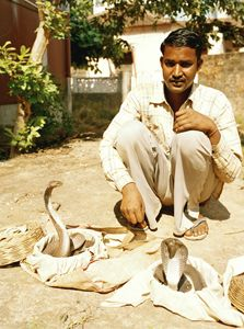 snake charmer Goa India 2016