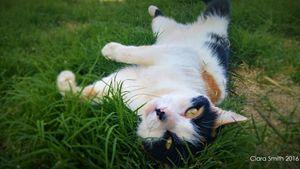 Cali in the Grass