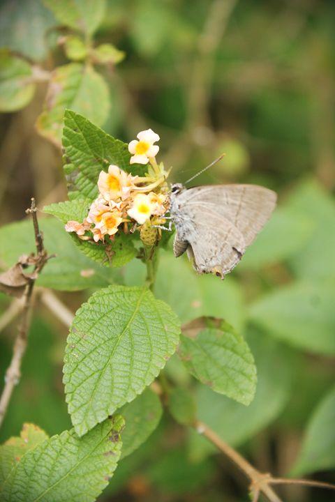 butterfly - 3tripleA