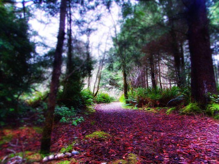 Oregon's Trail of Wonderland - Coastal Photography and Paintings
