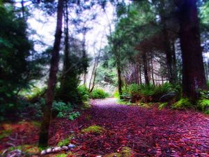 Oregon's Trail of Wonderland