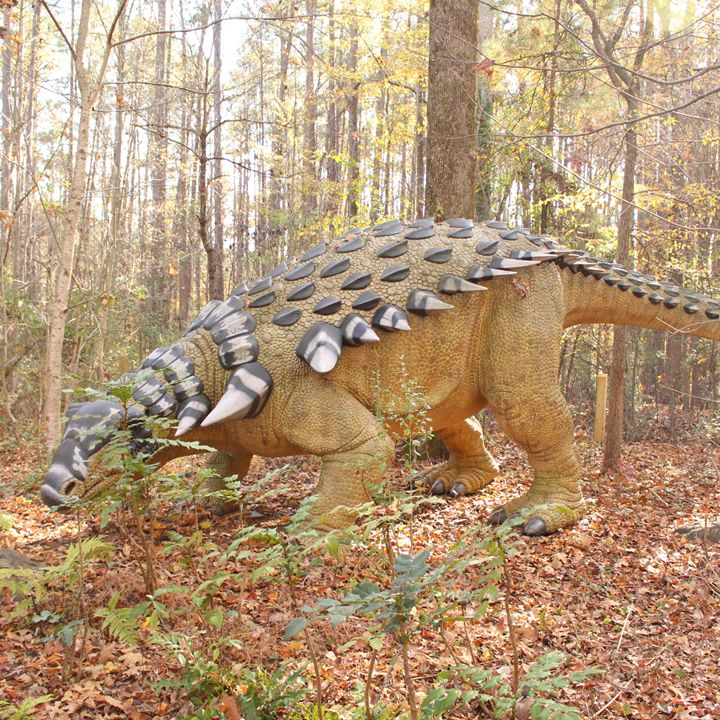 Prickly Dinosaur Monster - Klacey's Photography & Gifts