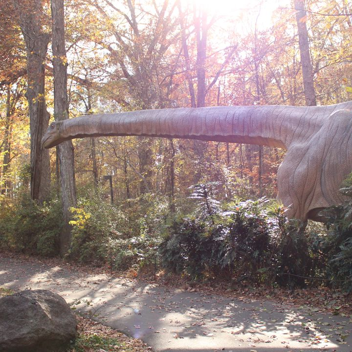 Bronto Long Neck - Klacey's Photography & Gifts