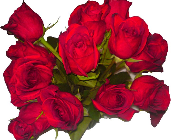 Red Roses Bunch - Gareth Store