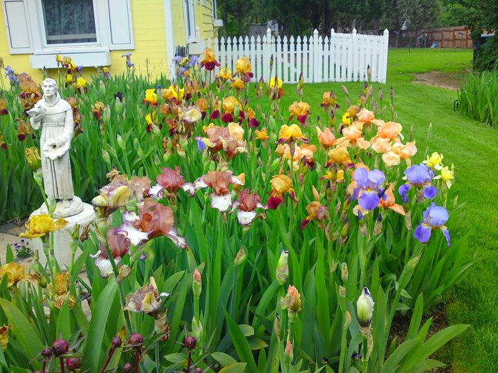 Multi Colored Iris Flower Patch - Gareth Store