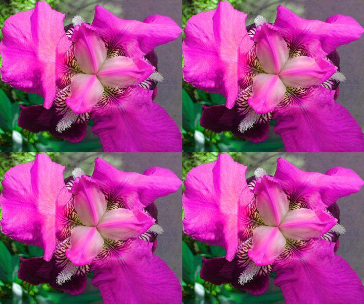 4 Pink IRis flowers - Gareth Store