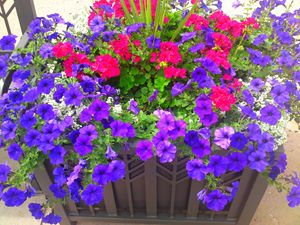 Petunia Flower Patch - Gareth Store
