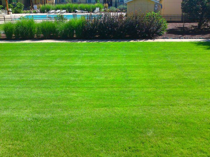 Field of Green Grass - Gareth Store