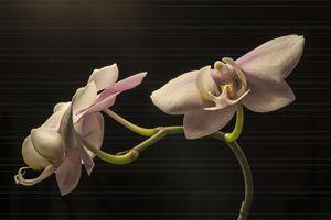 Zen flower