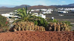 Volcanic Village