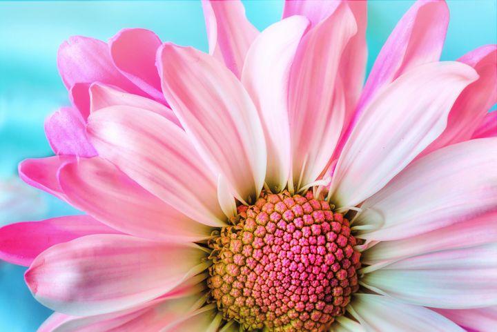 Pink flower - Impresonarte