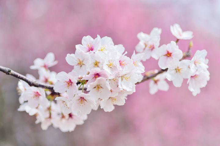 White blossom - Impresonarte