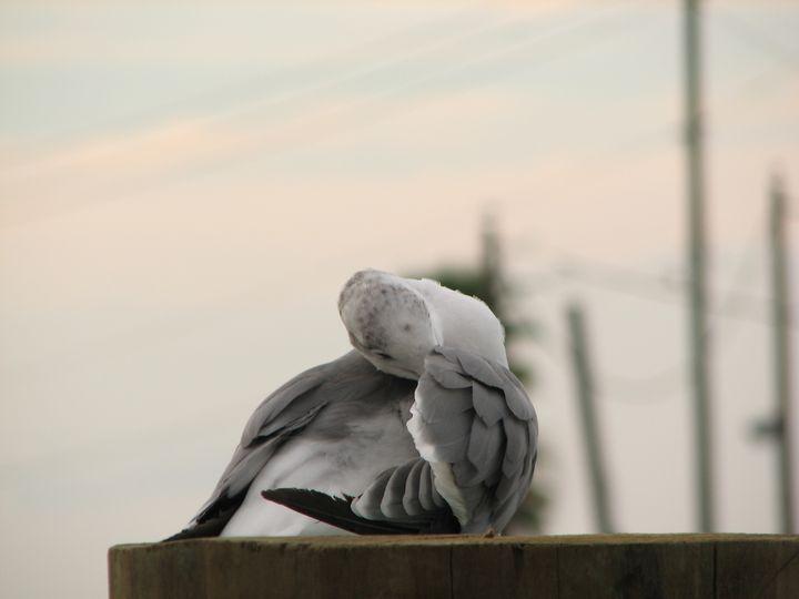 Don't see gull me - Impresonarte