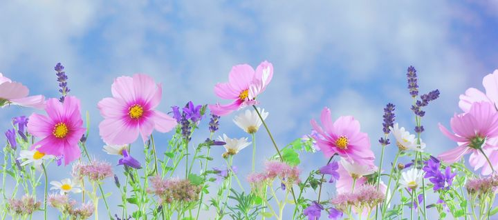 Wild flowers - Impresonarte