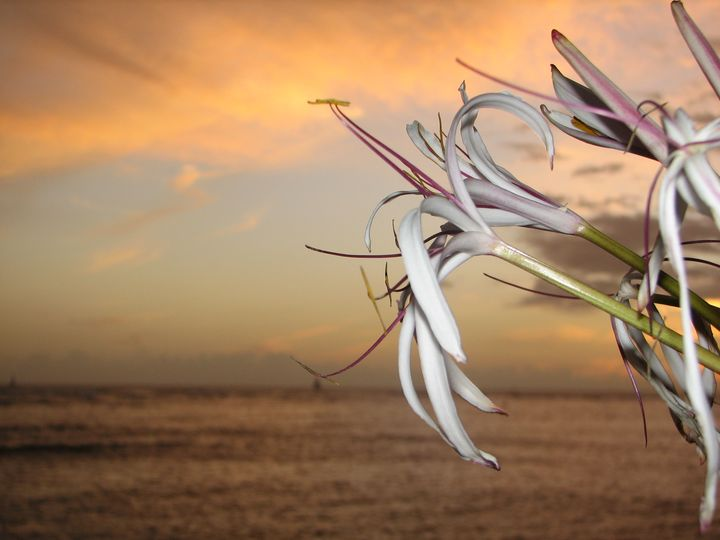 Flower in the sunset - Impresonarte