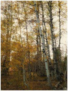 Autum Trees