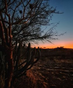 Cactus and sunset