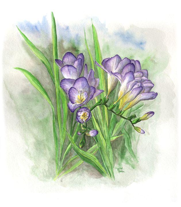 Purple Freesia - Crystal Newton