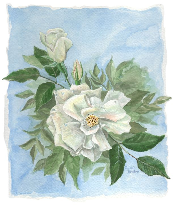 Wild white rose - Crystal Newton